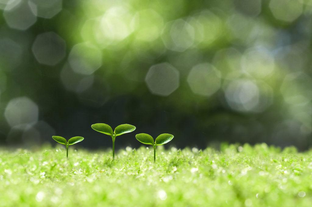 10 điều bạn có thể làm cho trái đất của chúng ta