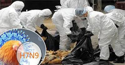 CÔNG ĐIỆN KHẨN: Ngăn chặn dịch cúm gia cầm Trung Quốc vào Việt Nam