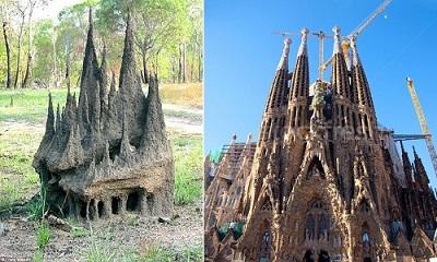 Gò mối ở Australia giống vương cung thánh đường Sagrada Familia ở Barcelona, Tây Ban Nha