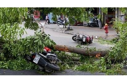 Giông lốc dữ dội ở Sài Gòn quật đổ cây lớn, giật tung biển hiệu