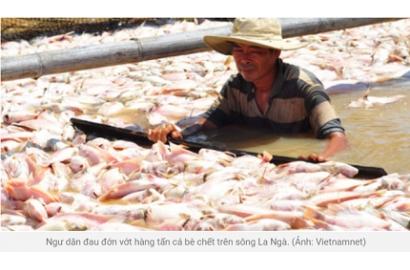 Cá chết trắng trên sông La Ngà, nông dân gánh thêm chi phí thu vớt cao ngất ngưởng